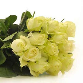 Send 12 White roses Bunch Urgent Delivery