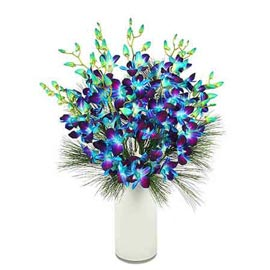 Send 10 blue orchids glass Vase Midnight Delivery