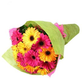 buy 15 Pink n Yellow gerberas Bunch Fast Delivery