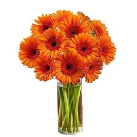 Send 12 Orange gerberas glass Vase Urgent Delivery