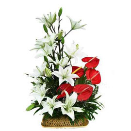 Send 5 Red Anthurium and 6 White lilies Basket Urgent Delivery