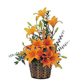 buy 8 Orange lilies cane Basket Midnight Delivery