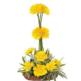 Send 10 Yellow gerberas cane Basket express Delivery