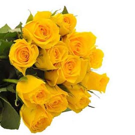 buy 12 Yellow roses Bunch Same Day Delivery