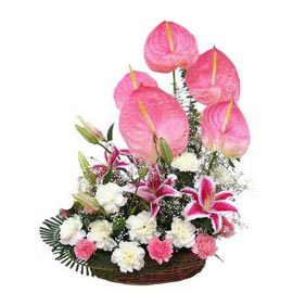 Send exotic Anthurium lilies n carnations Basket Same Day Delivery
