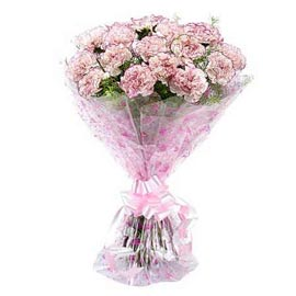 Send 12 Pink carnations Bunch Xpress Delivery