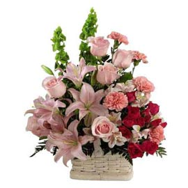 Send carnations roses n lilies cane Basket Same Day Delivery