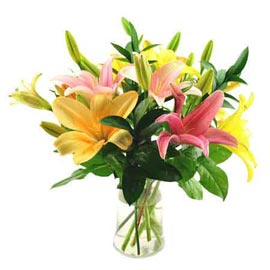 Send 6 Pink & Yellow lilies glass Vase Midnight Delivery