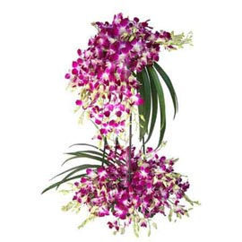 Send 70 purple orchids designer one sided Basket 24 hrs Delivery