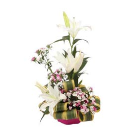 Send carnations n White lilies cane Basket Same Day Delivery