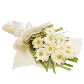 Send 10 White gerberas Bunch Midnight Delivery