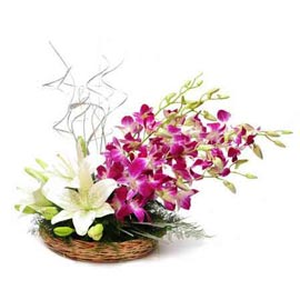 Send orchids n White lilies cane Basket Midnight Delivery