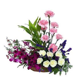 Send carnations roses n orchids Basket Same Day Delivery