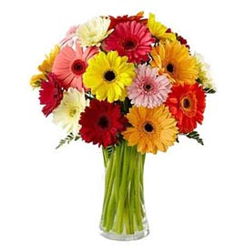 Send 15 mix gerberas Bunch Same Day Delivery