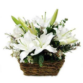 same day 6 White lilies cane Basket express Delivery