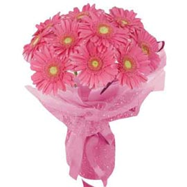buy 15 Pink gerberas Bunch Midnight Delivery