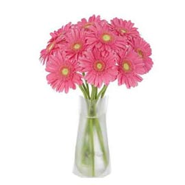 buy 12 Pink gerberas glass Vase Same Day Delivery
