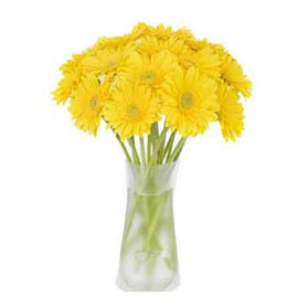 buy 12 Yellow gerberas glass Vase Midnight Delivery
